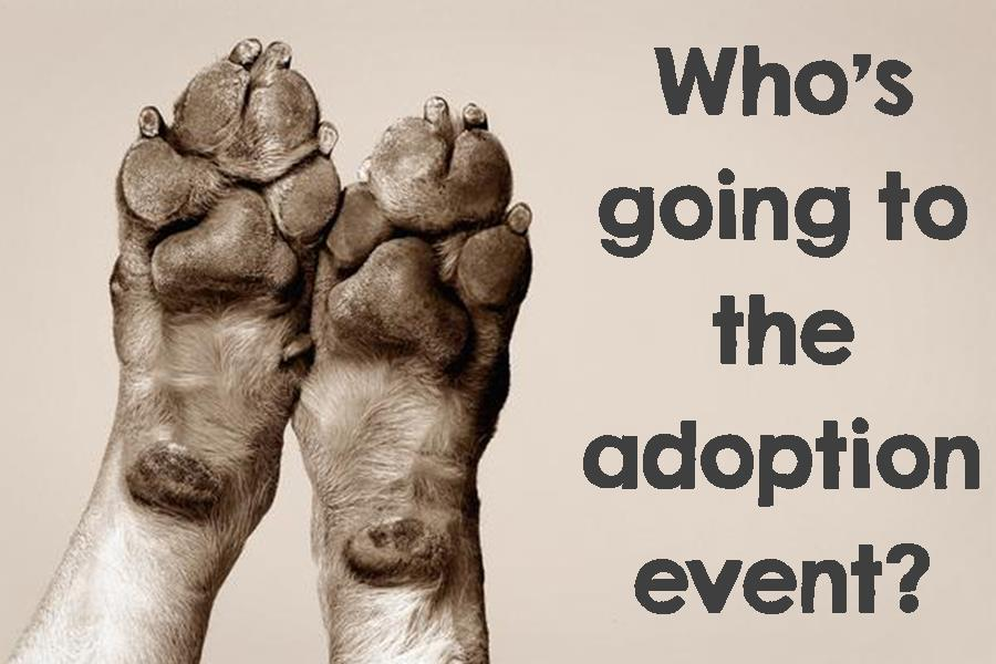 Adoption Clinic