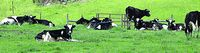 June is Dairy Month--but economy