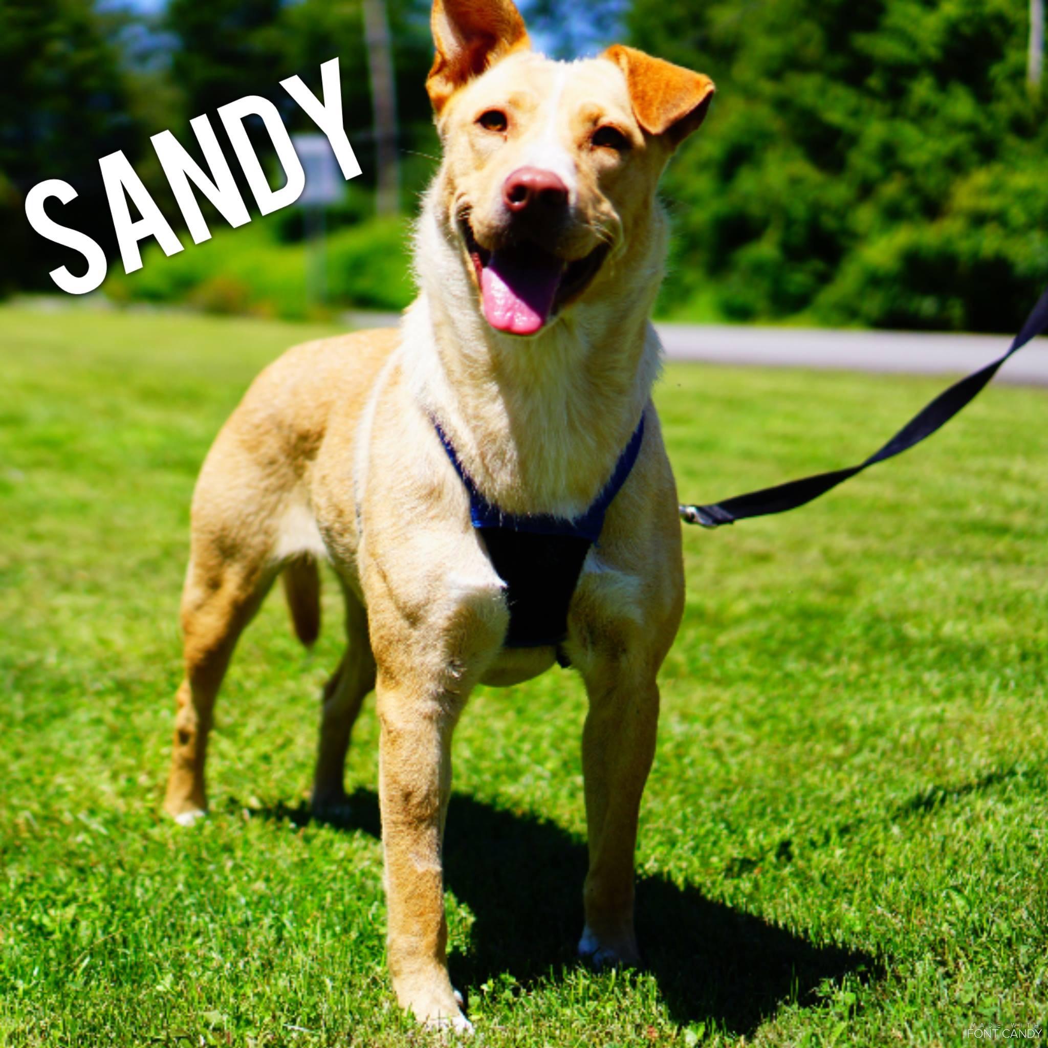 Sandy -