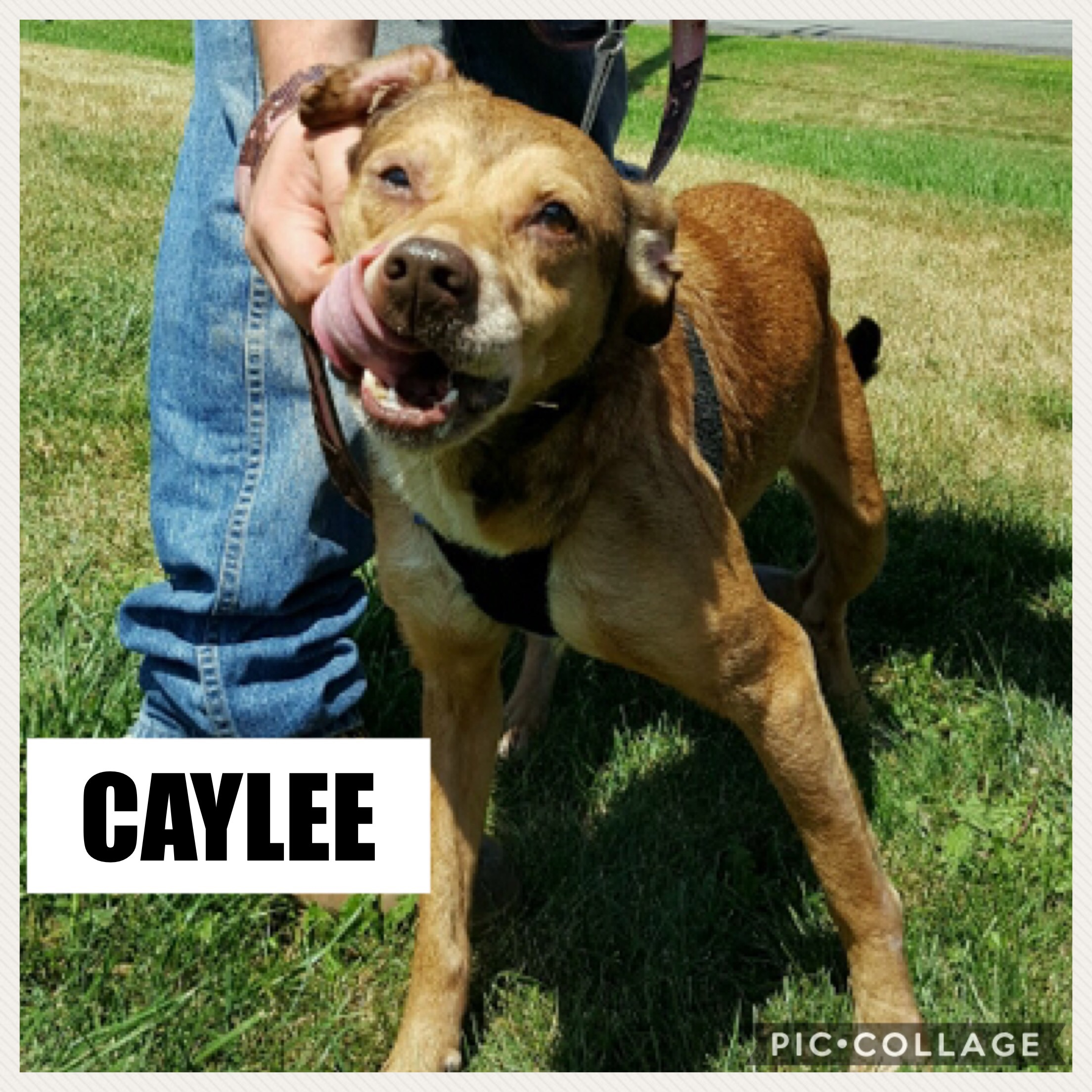 Caylee (Bonded Pair) - Mix Breed