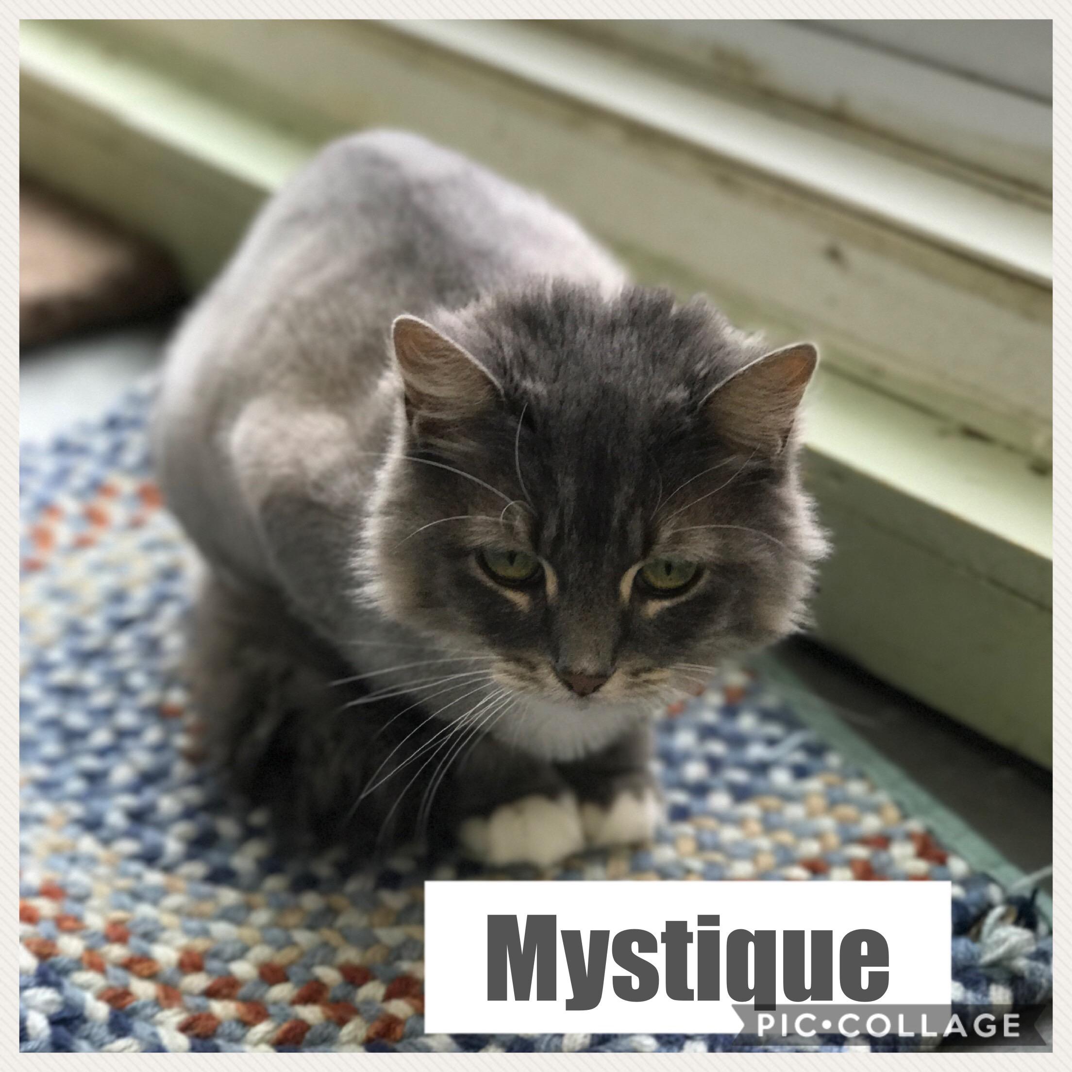 Mystique - Domestic Long Hair
