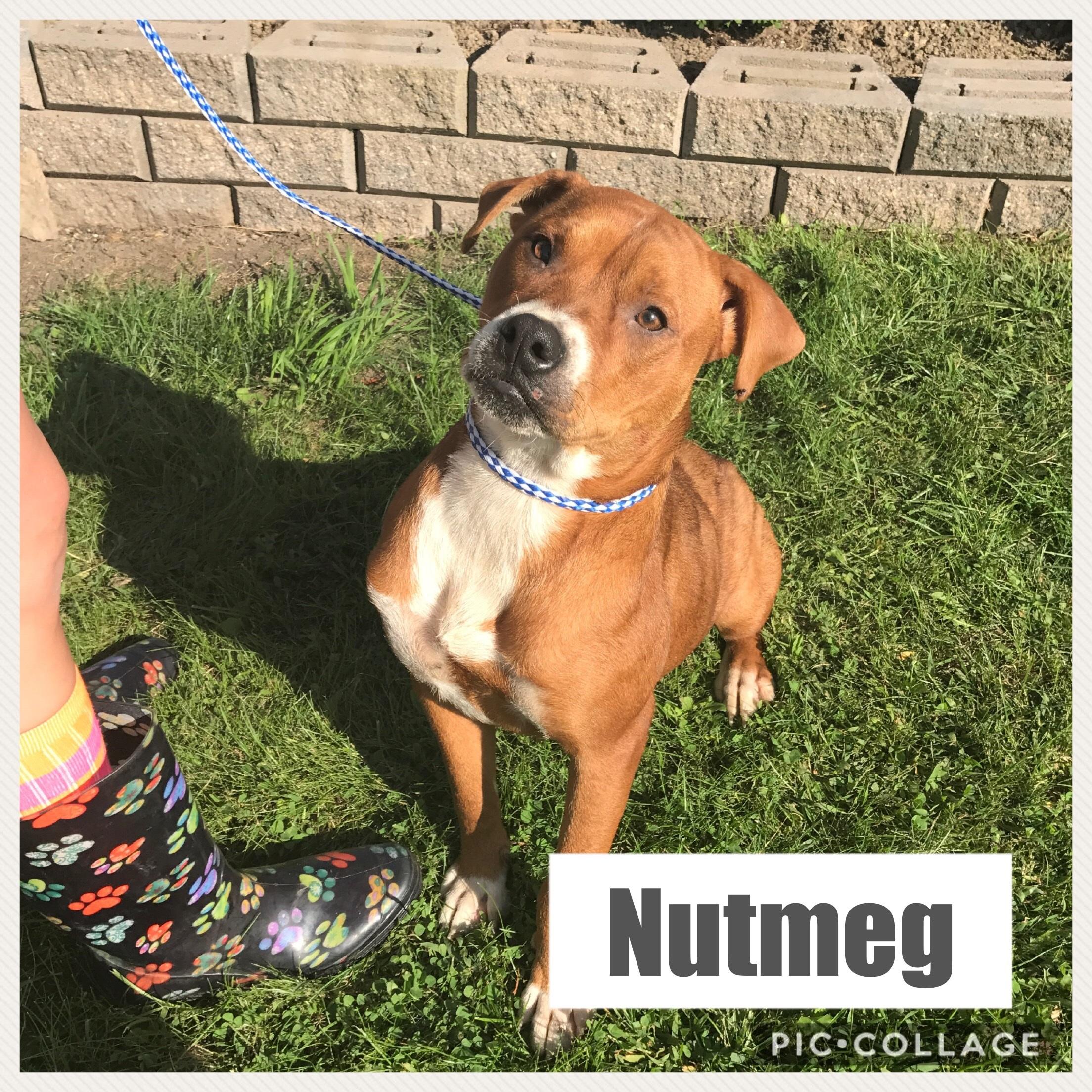 Nutmeg - Mixed Breed