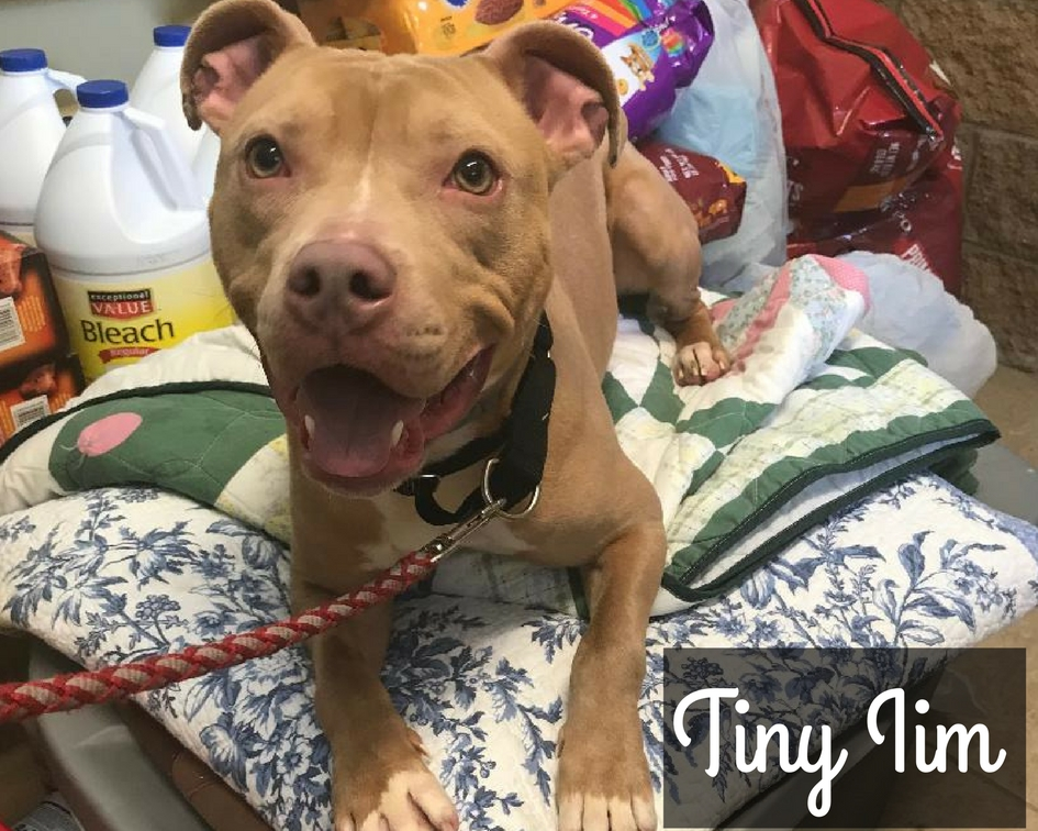 Tiny Tim - Mixed Breed