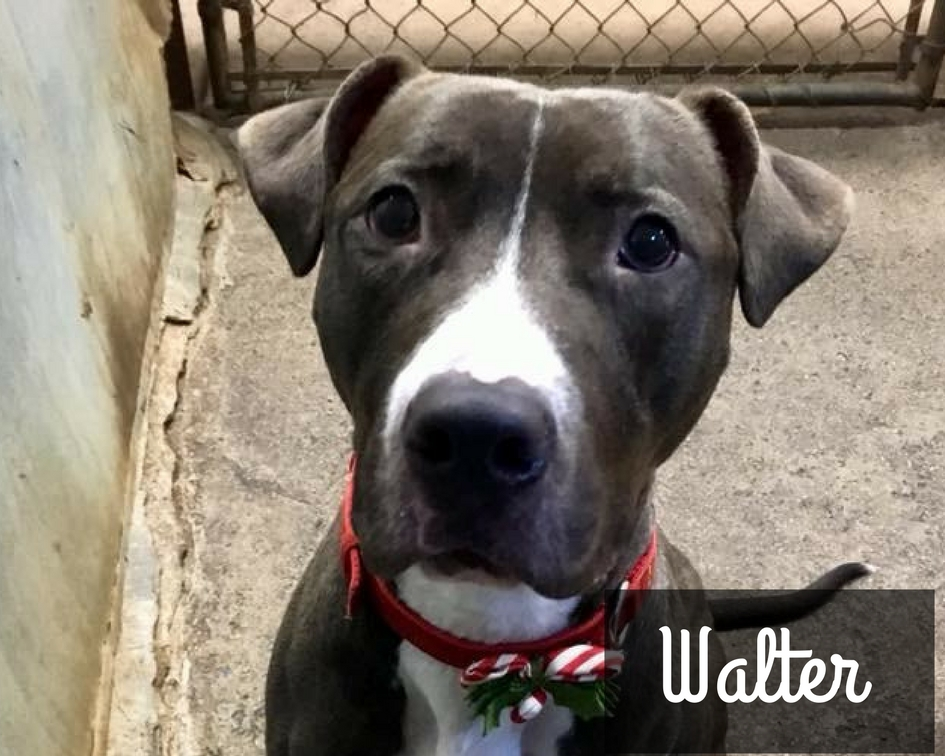 Walter - Mixed Breed
