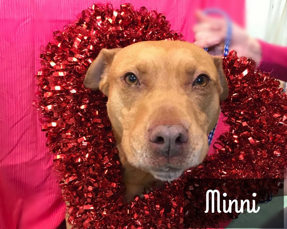 Minni - Mixed Breed