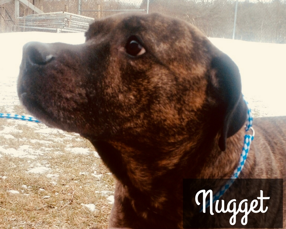Nugget | Large 12 years Female Mixed Breed