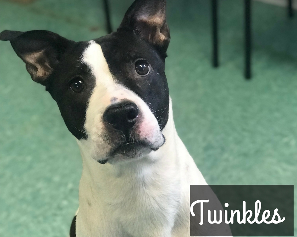 Twinkles - Terrier Mix