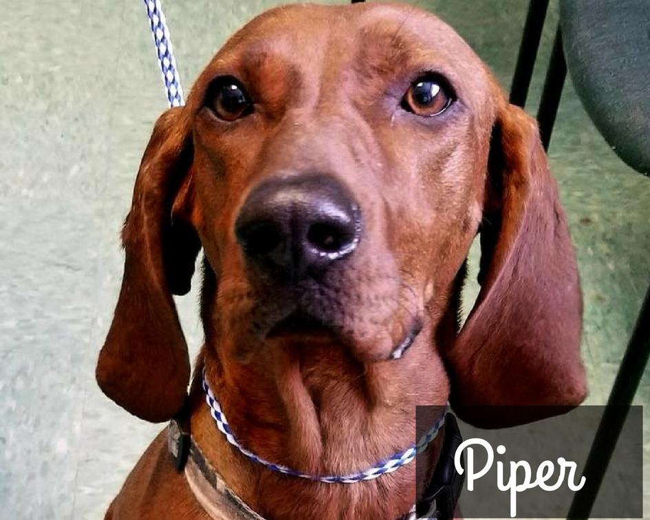 Piper - Redbone Hound
