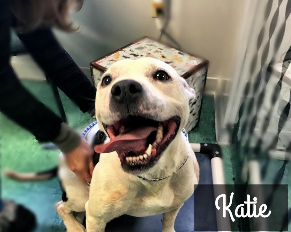Katie - Terrier Mix