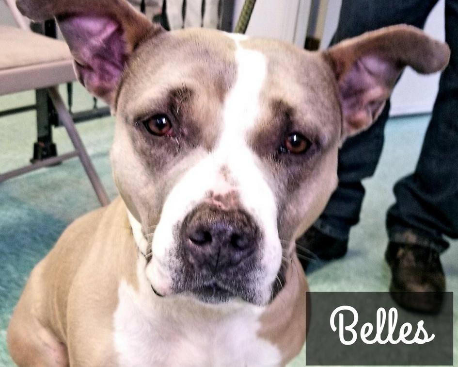 Belles - Mixed Breed