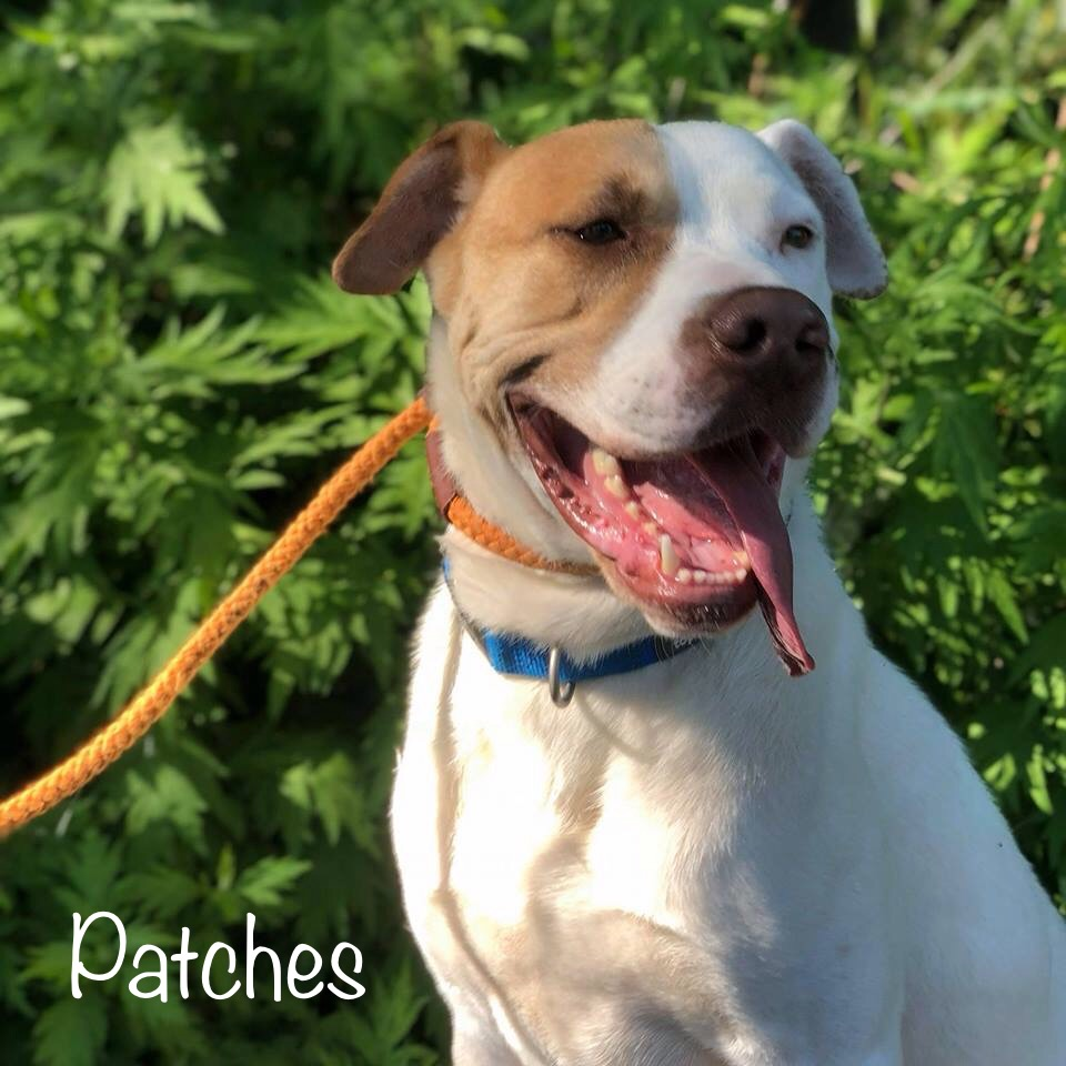 Patches - Boxer Mix