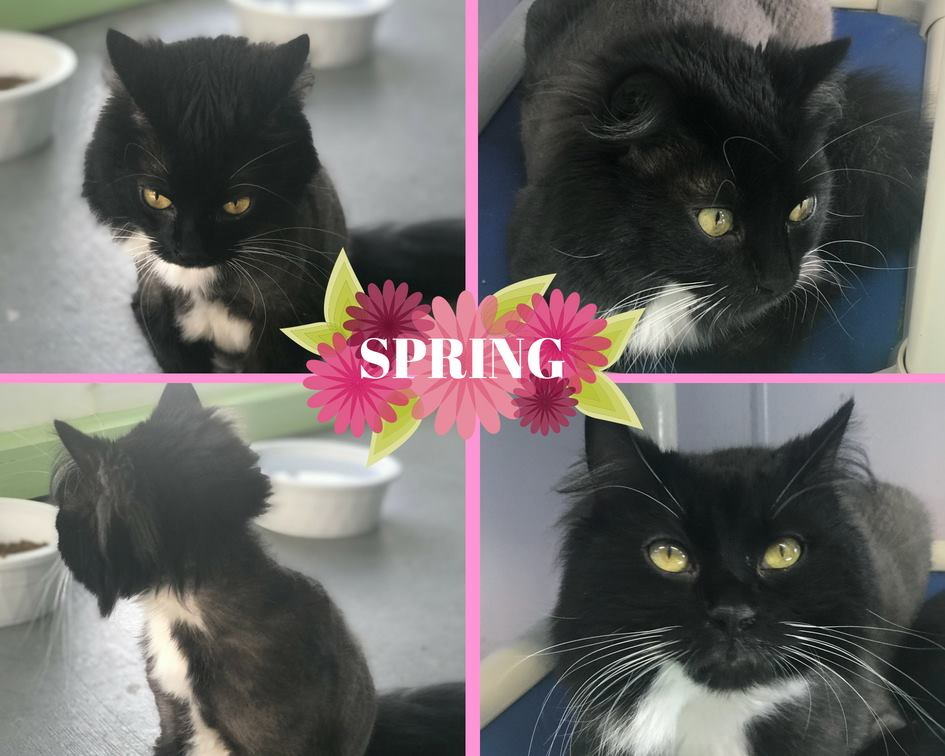 Spring - Domestic Long Hair