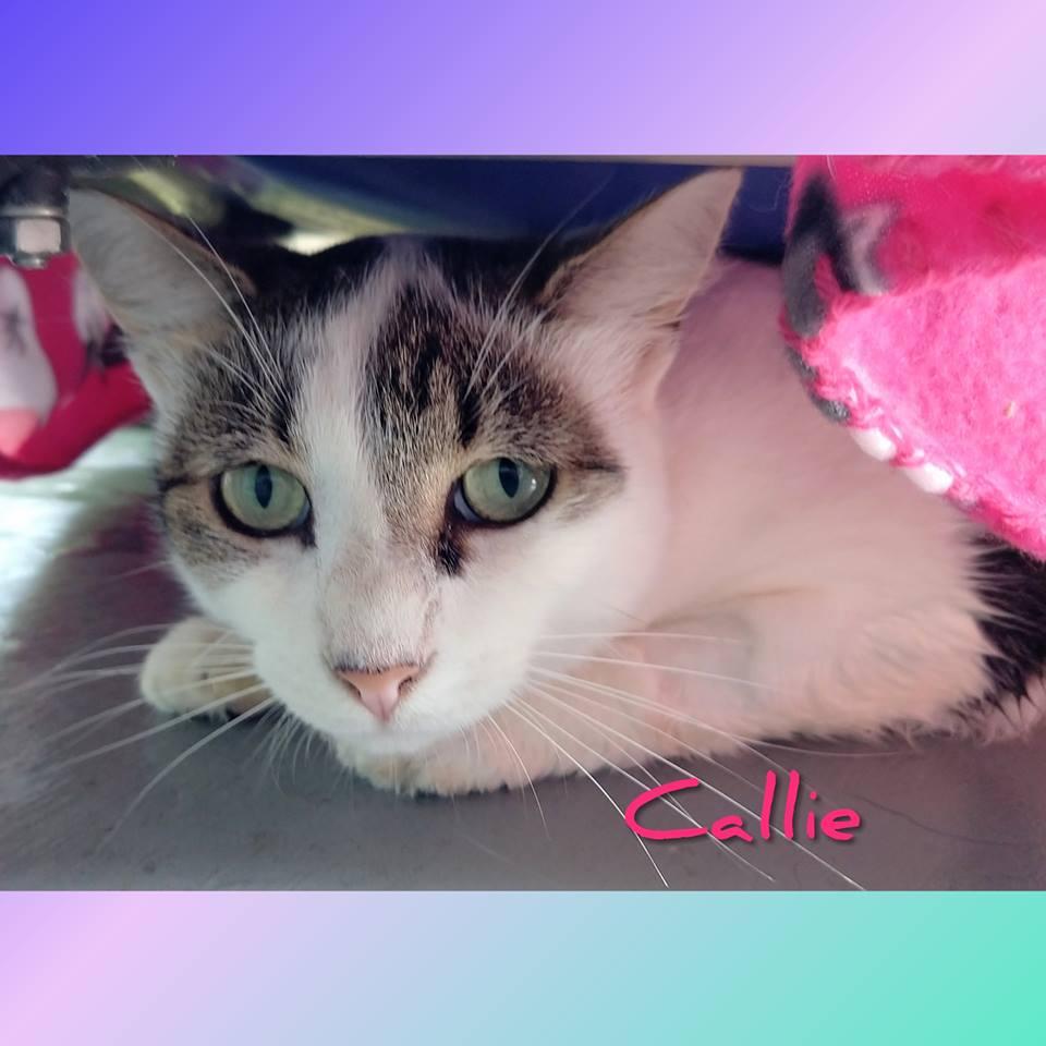 Callie -