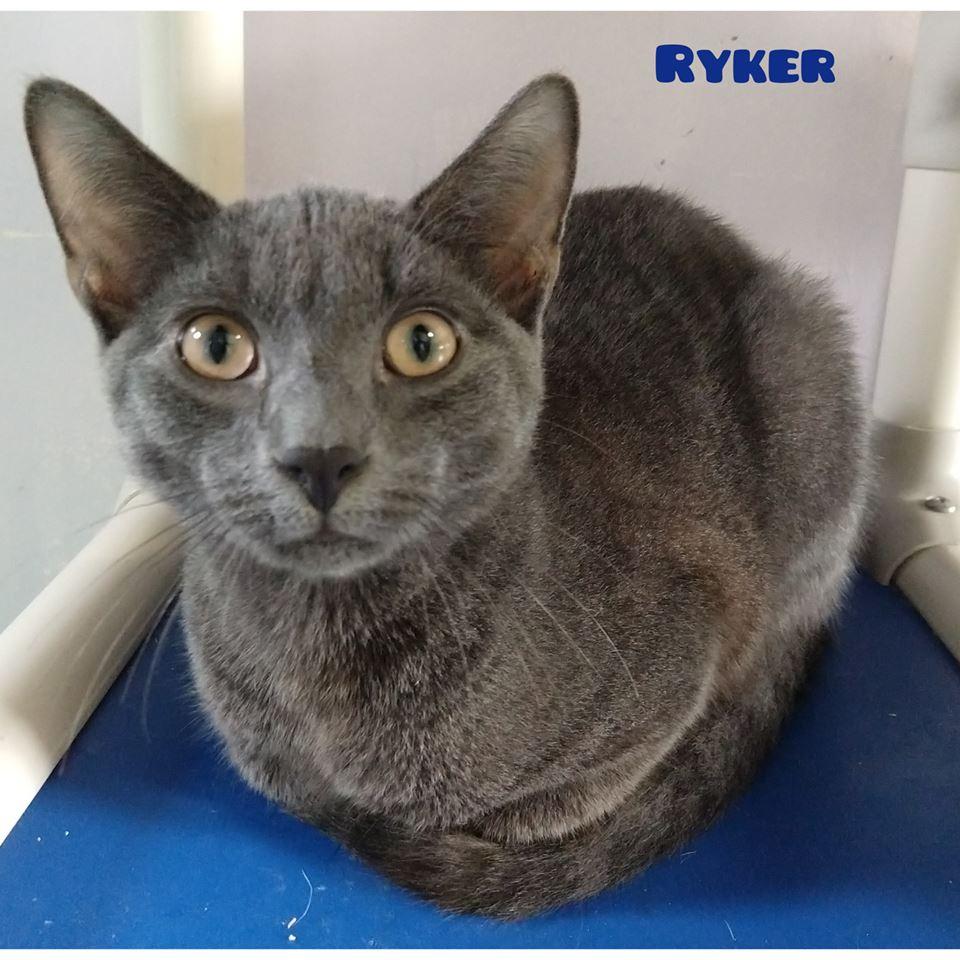 Ryker -