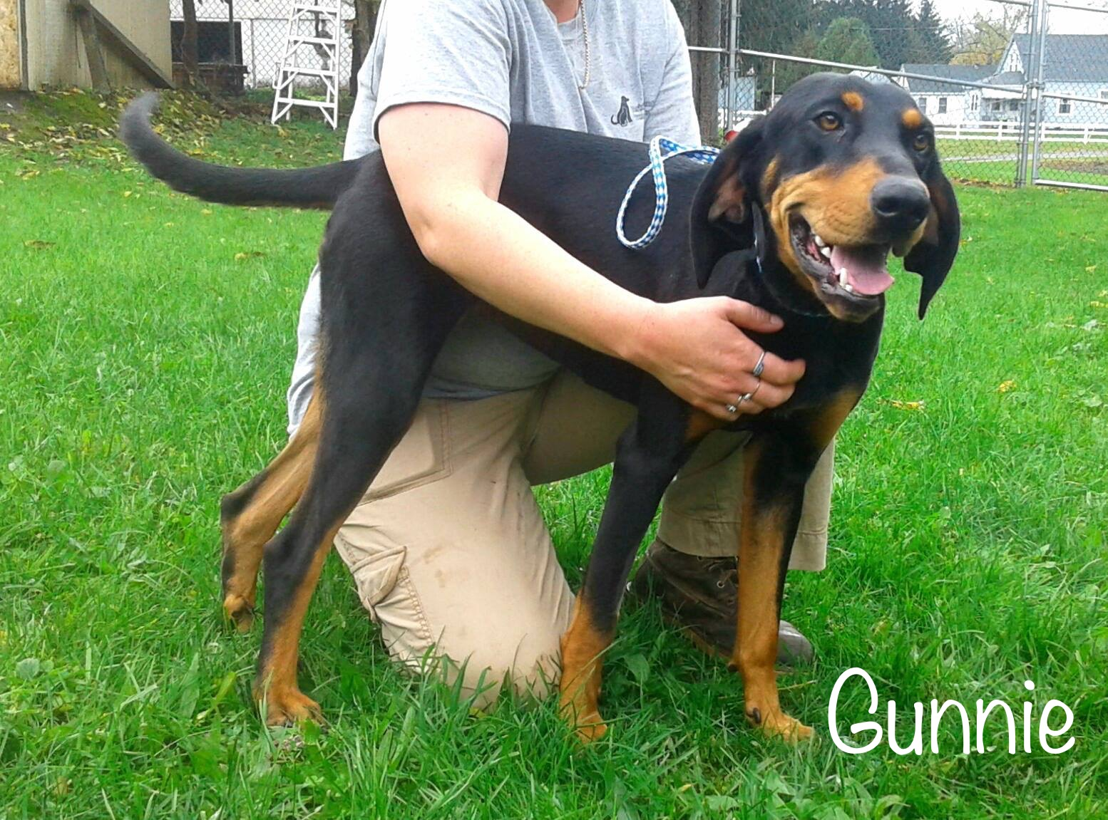 Gunnie - Coonhound