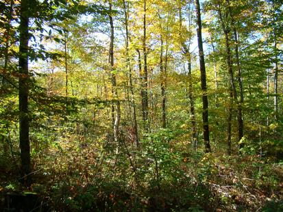Lake Ontario/Tug Hill land for sale in New York