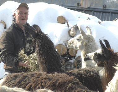 Llamas get a 3rd chance in Middleburgh