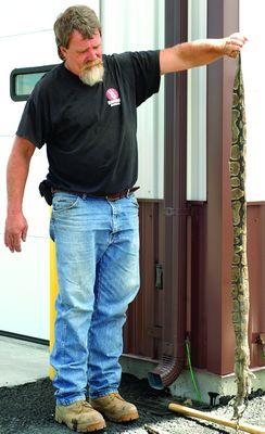 Dumped pythons surprise Richmondville