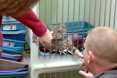 99 seized, surrendered cats crowd Shelter